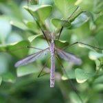 Tre semplici consigli per ridurre la presenza di zanzare